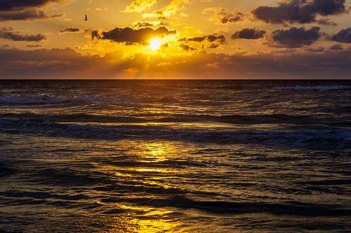sea usa beach gulfofmexico sunrise fishing texas seagull earlymorning portaransas