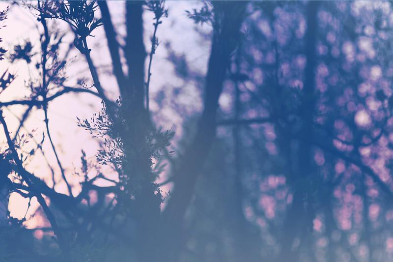 blur-dreamy-texture-texturepalace-20