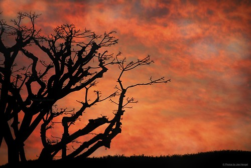 california ca red favorite orange tree silhouette clouds sunrise o outdoor hill silhouettes socal southerncalifornia orangecounty oc berm enhanced theoc sanjuancapistrano treebranch