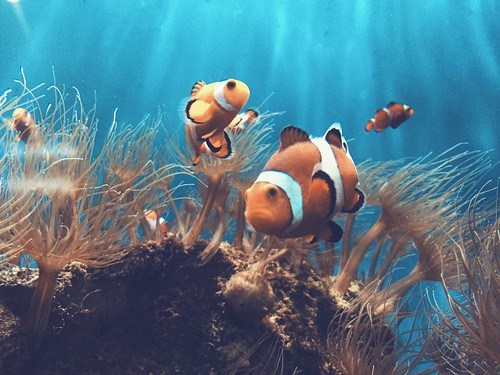 Finding Nemo | by [lix]