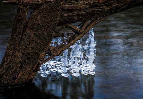 winter tree ice nature water river landscape frozen us newjersey unitedstates drcanal nj kingston princeton icicles millstoneriver intimatelandscape delawareandraritancanal