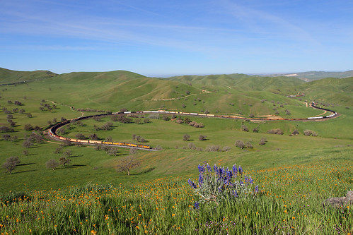 california ca railroad flowers up grass train unionpacific locomotive lupine allard freighttrain tehachapipass bealville manifestfreight allardhorseshoecurve