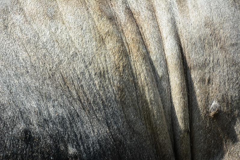 animal-fur-closeup-texturepalace-10