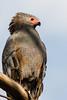 Smart bird by Pascal Bernardin