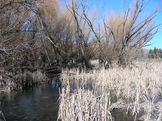 vernon-wetlands-2