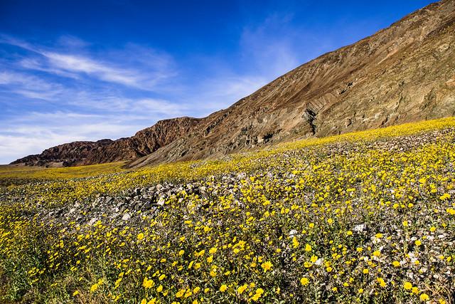 Desert Early Bloom