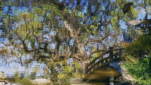 bridge woodbridge wood arch archbridge pond lake hdr 1xp raw nex6 sel50f18 photomatix saratoga california hakonegardens japanesegarden japan garden green wet nature outdoor reflection distortion wave wetreflection tree fishview fishperspective upsidedown fav100 siliconvalley