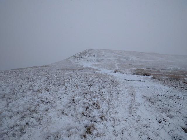 Lord Hereford's Snowy Knob #sh