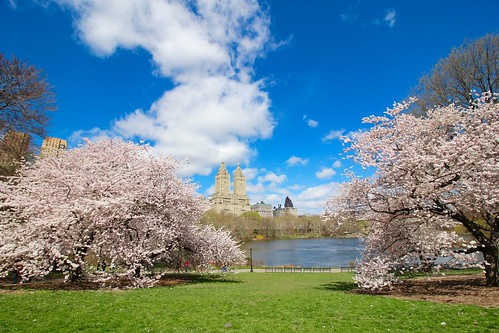 Central Park Cherry Blossoms 2016 | by shinya