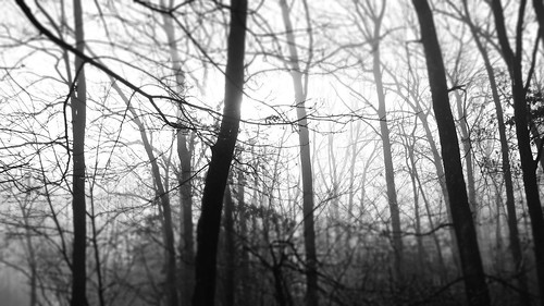 flickr foto photo image capture picture photography sony bw tree trees forest woods serene gloomy dark cold raw fog shadows pretty beauty beautiful winter outdoor outdoors nature texture massachusetts sonydscw300 blackandwhite plainvillemassachusetts newengland