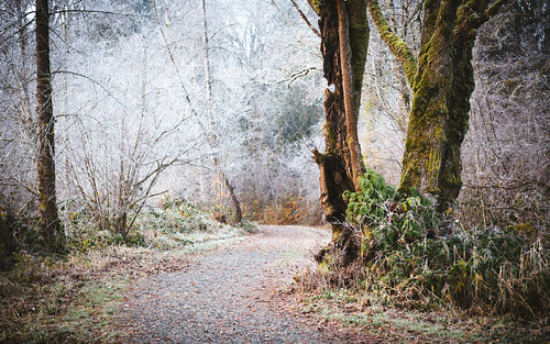 forest trees frost morning path trail carnation pacificnorthwest canoneos5dmarkiii canonef2470mmf28lusm johnwestrock washington