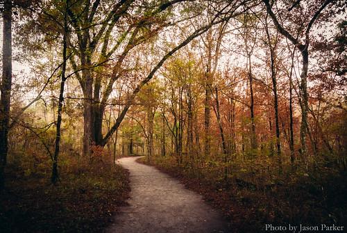 autumn trees winter wild color fall nature forest woods florida outdoor hiking wilderness naturalbeauty polarizer ichetuckneesprings fortwhite wikd nikon1 mirrorless ichetuckneespringsstatepark vsco floridahikes hiketography vscofilm