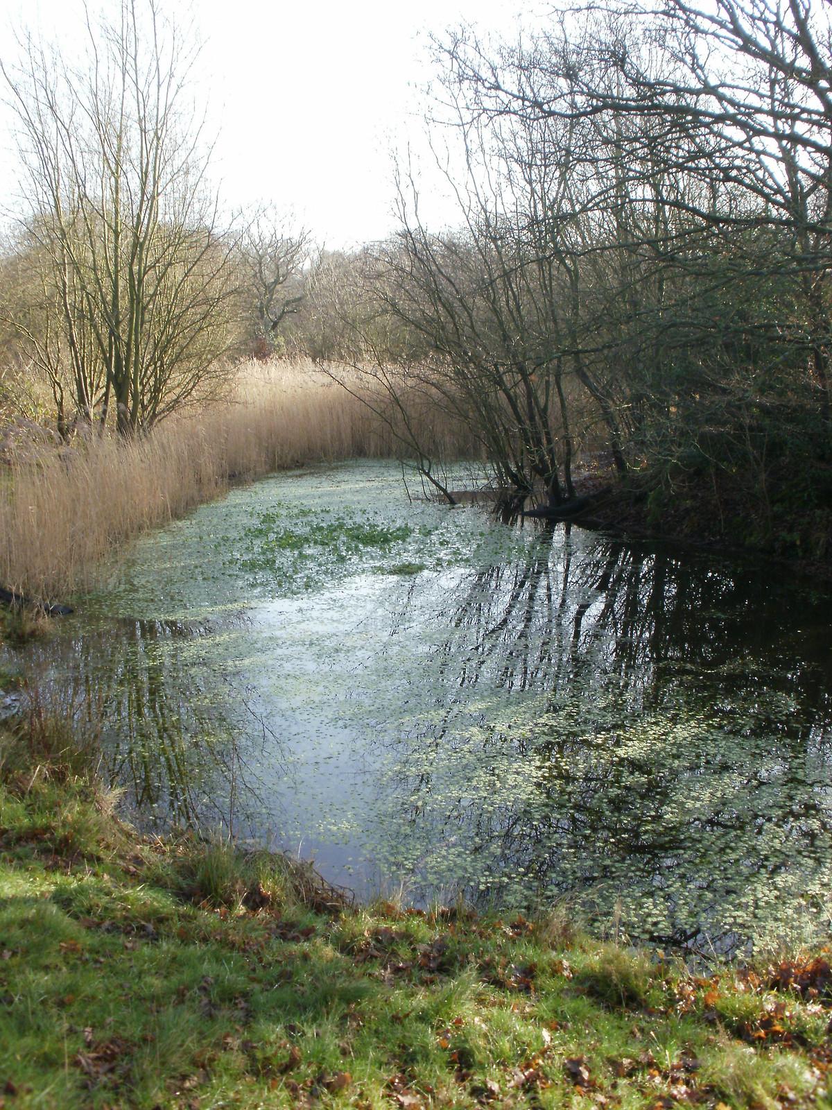 Epping Forest pond grasses OLYMPUS DIGITAL CAMERA