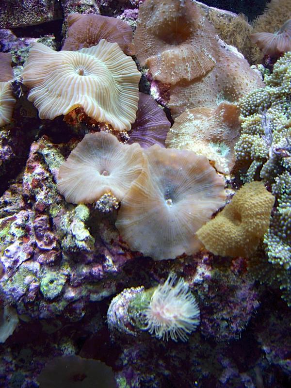 08192007 Saltwater Fish Tank (26)