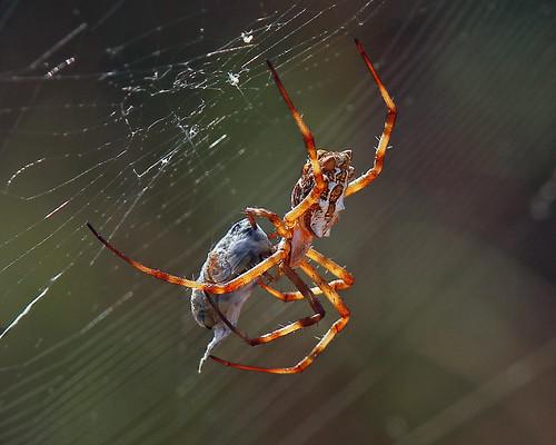 wild nature photography flickr wildlife explore wildlifephotography macrolife nationalgeograghic