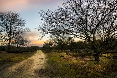 trees sunset sky nature belgium heather natur moor landschaft bäume heide belgien