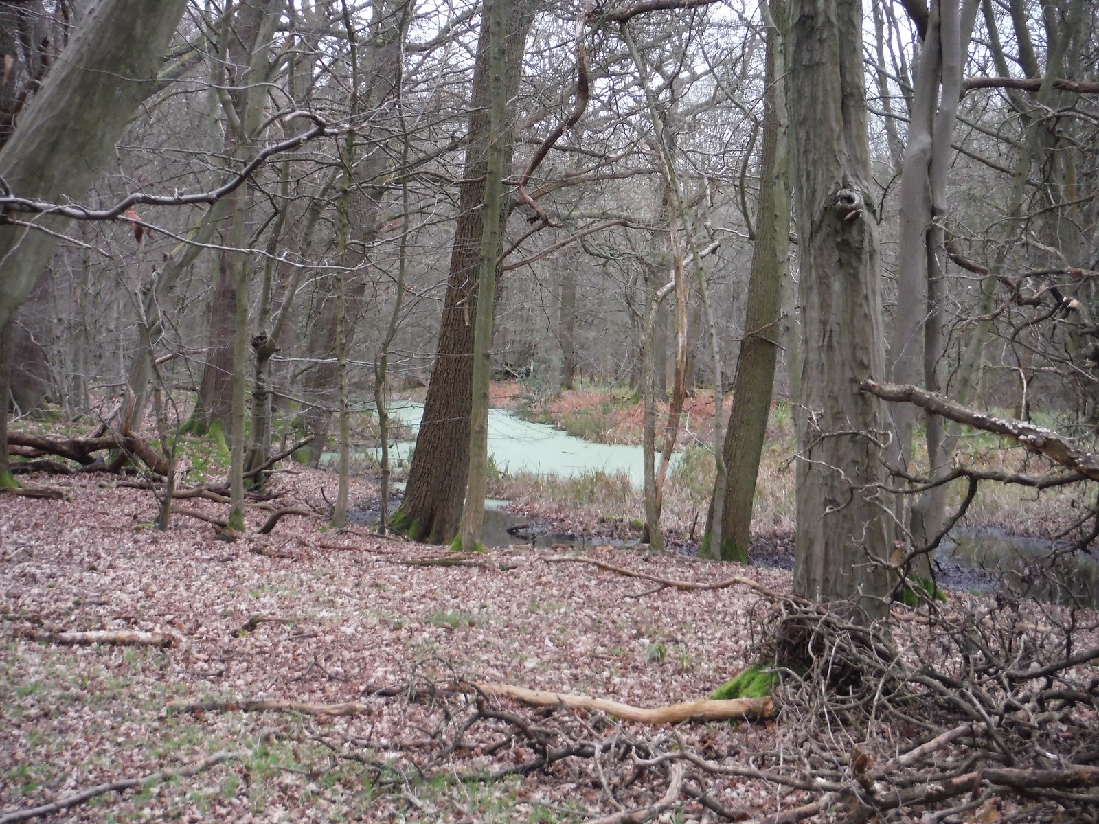 Long Pond, Westfield Grove SWC Walk 168 Broxbourne Circular