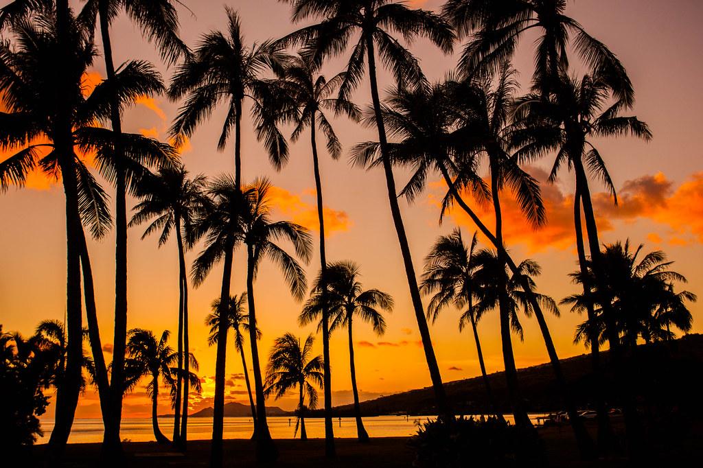 Palm Tree Sunset Hawaii Kai | Anthony Quintano | Flickr