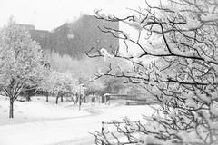 Groundhog's Day Snowstorm