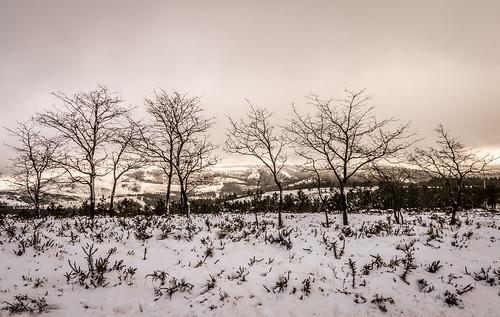 trees sky white snow portugal canon landscape paisagem céu neve serra árvores lousã serradalousã pedronascimento