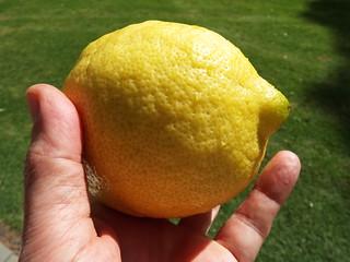 starr-140119-3210-Citrus_limon_x_medica-fruit-Hawea_Pl_Olinda-Maui   by Starr Environmental