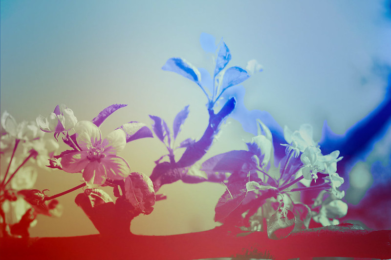 blur-dreamy-texture-texturepalace-26
