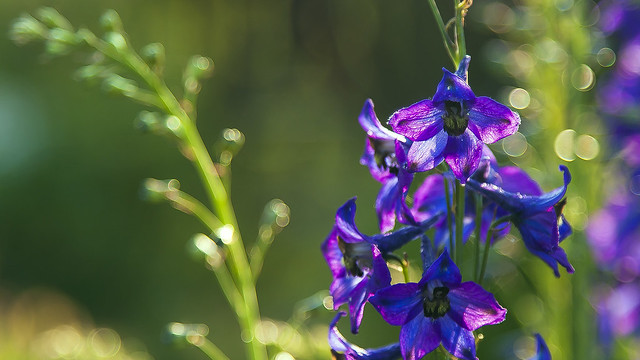 fragrance of summer