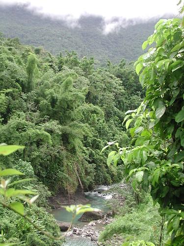 portland landscape geotagged jamaica millbank geolat18023139 geolon76383133