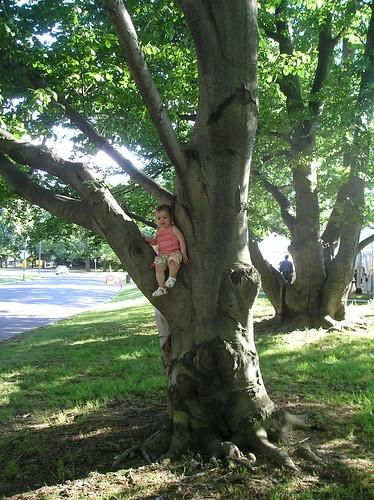 Princess in a tree II