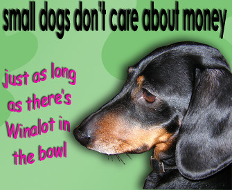 Small dogs don't care about money