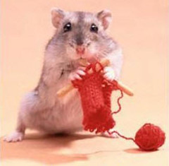 hamsterknit