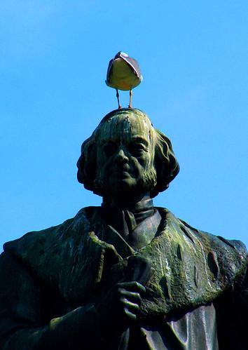 BirdHeadFull