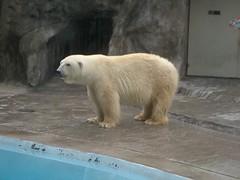 Zoo - 01 - Polar