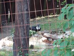 06-26--zoo-visit-- 010