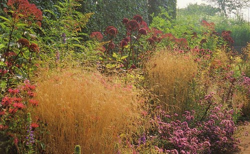 wild garden border