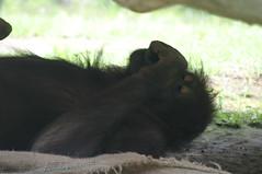森の人、お昼寝中