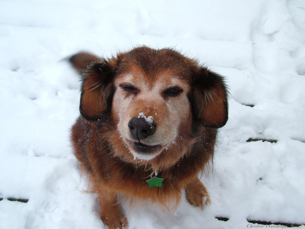 I got snow on my nose!