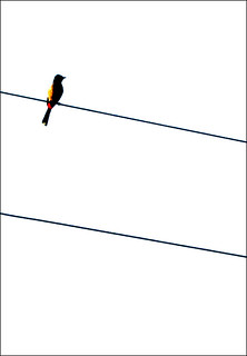 "Cohen's ""Bird on the Wire"" 