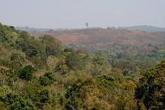 Mondolkiri mixed forest