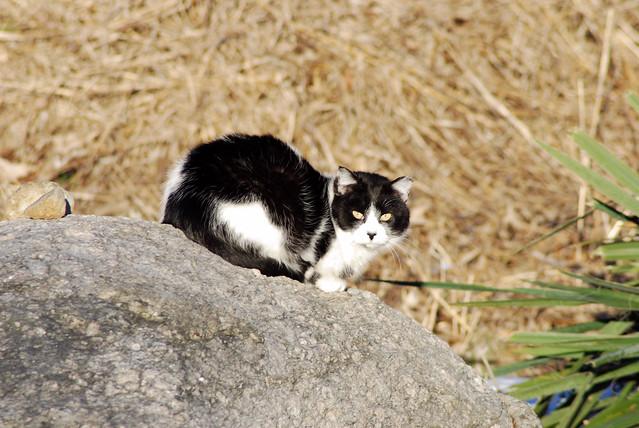 Feral cat b