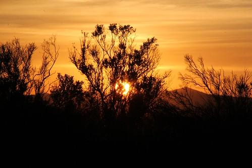 sunset northerncalifornia wetlands suisuncity solanocounty peytoniasloughecologicalreserve