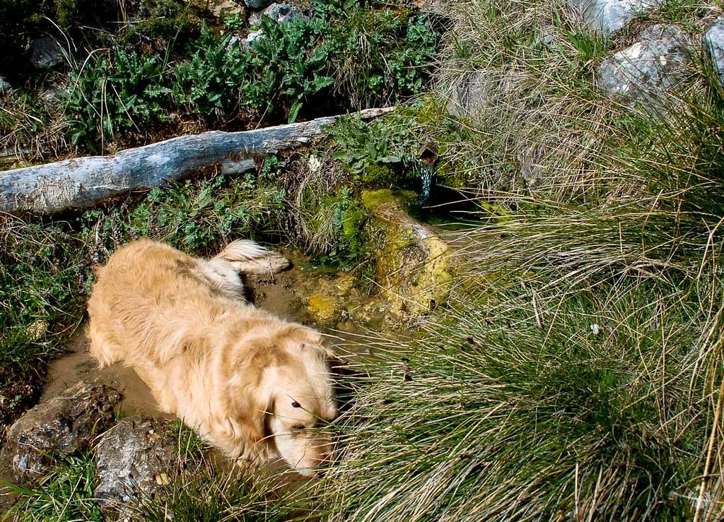 Moss recuperando líquidos en la Fuente de los Caños