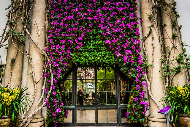 Orchid wall...