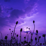 Purple Sunset for Our One and Only Prince