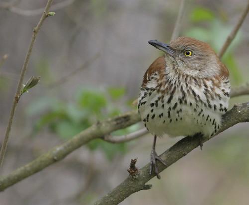 bird nature birds canon outdoors ornithology birdwatcher backyardbirding naturewatcher newenglandwildlife connecticutbirds newenglandbirds connecticutbird newenglandbird newenglandwildlifephotography
