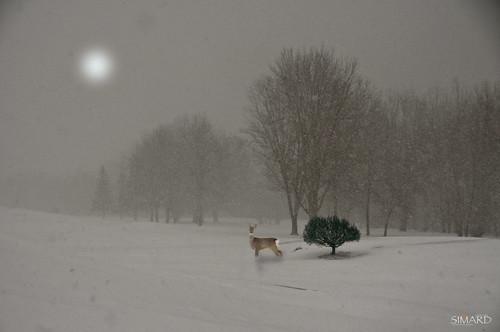 "nature golf photos arbres blanc brouillard flocons doux soyeux premièreneige immaculée majestueux ""nikonflickraward"" tapisblanc simpa©"
