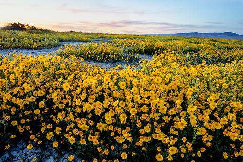 Carrizo Plain National Monument | by blmcalifornia