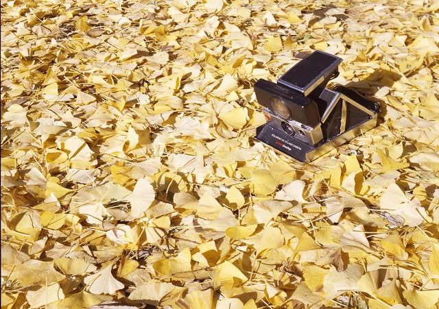 Polaroid on the Yellow Carpet