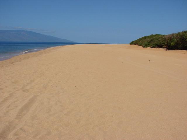 starr-070404-6693-Prosopis_sp-habit_view_beach-Polihua_Beach-Lanai