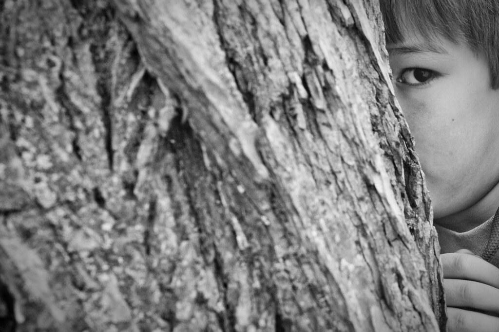 Behind the Elm Tree